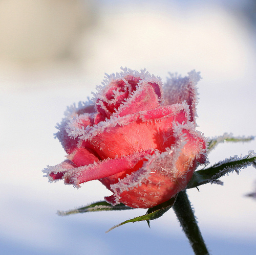 frost_10