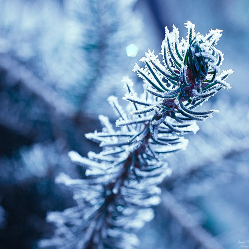 frost_4