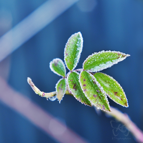 frost_6