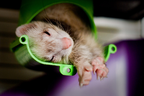 Ferrets can Sleep Anywhere - 365 Days of Rework - Day 58